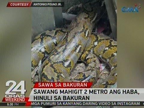 24 Oras: Sawang mahigit 2 metro ang haba, hinuli sa bakuran sa Cavite
