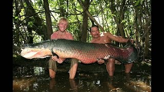 Cупер рыбалка на Арапайму . Рыбацкие легенды Якуба Вагнера  Амазония ч 1