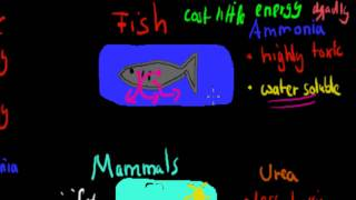 MB.3.12. How different animals remove nitrogenous waste (HSC biology)