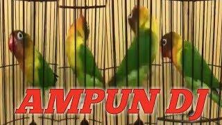 Top Hits -  Burung Lovebrid Goyang Nge Dj