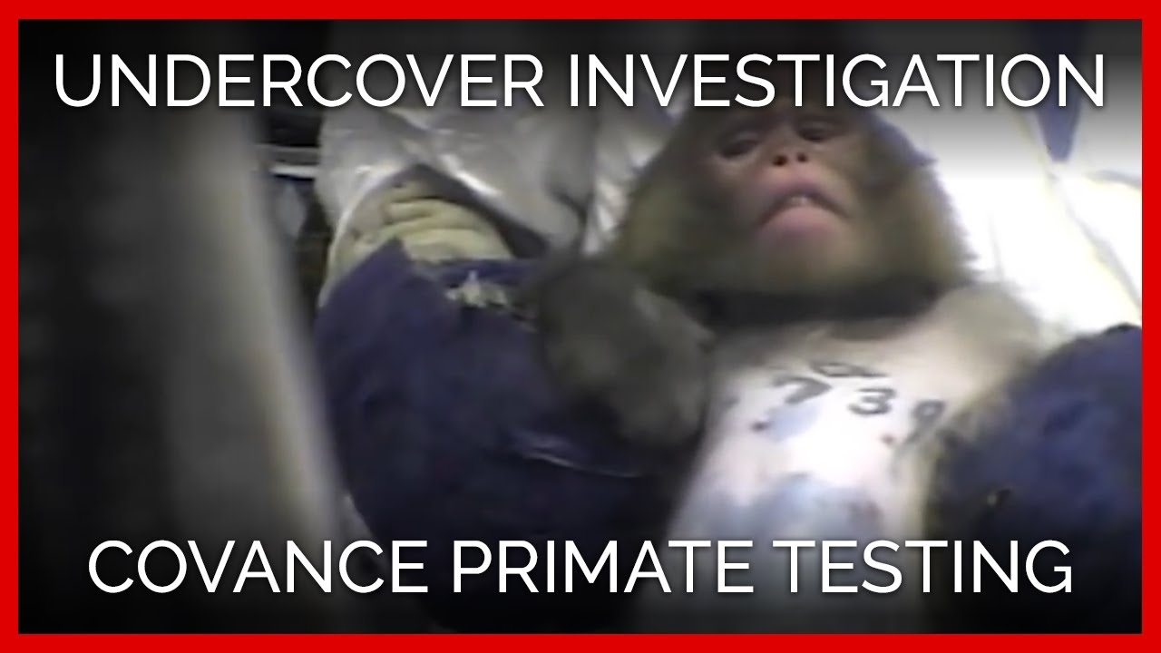 covance-undercover-investigation-in-virginia