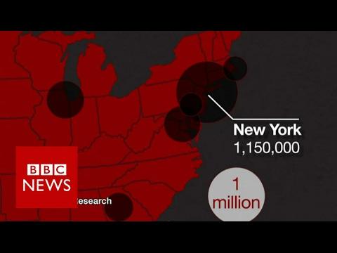 Where do America's undocumented immigrants live? BBC News