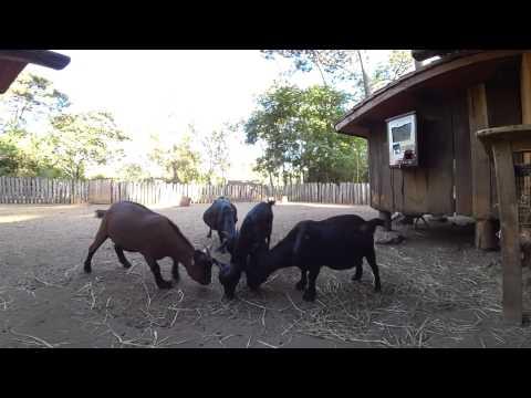 Une Saison Au Zoo - Le monde de la mini-ferme (Videos 360 S6)