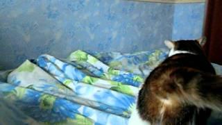 Кошка и постель