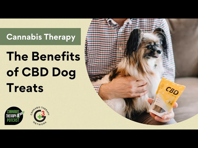 The Benefits of CBD Dog Treats