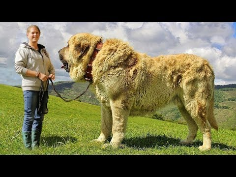 Top 10 Most Unknown Dog Breeds