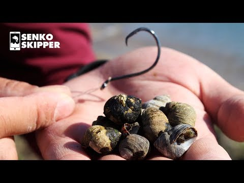 Find FREE Fishing Bait On The Beach! Easy And Fun Fishing