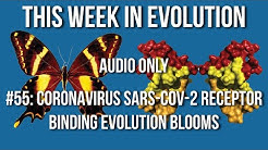 TWiEVO 57: SARS-CoV-2 receptor binding evolution blooms