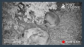 Lion Cub Cam Highlight | Lion Cub Cuddling Up With Dad