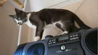 Кот на магнитофоне)