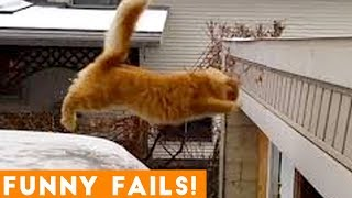 TRY NOT to LAUGH Animals FUNNY PET FAILS Compilation  2019  Epic Pet Videos amp Moments