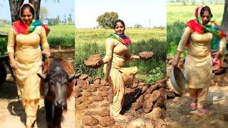 My Daily Working Routine... Punjab Village Life ( India )