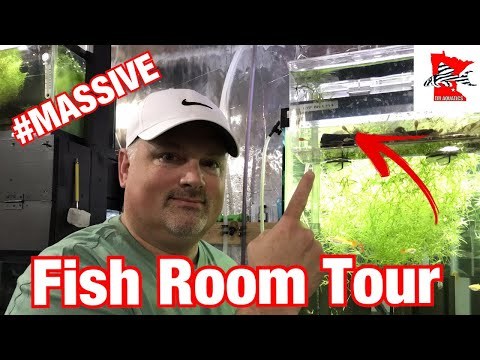 Massive Fish Room Tour With Monster Severums