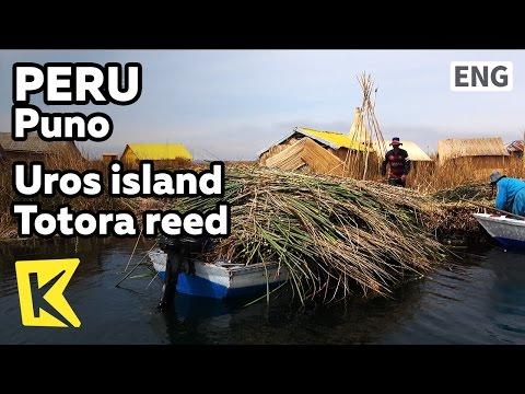 【K】Peru Travel-Puno[페루 여행-푸노]우로스 섬으 필수 토토라 갈대/Titicaca lake/Uros island/Totora reed/Tipi