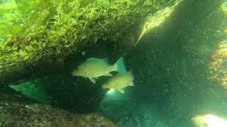 Snorkeling at the Destin Jetties - raw video 8