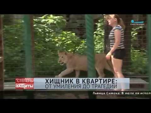 Вопрос: За сколько можно купить львенка?