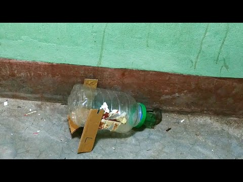 How To Make Mouse Traps With Plastic Bottle | Easy Mouse Trap | Idea Rat Trap Homemade