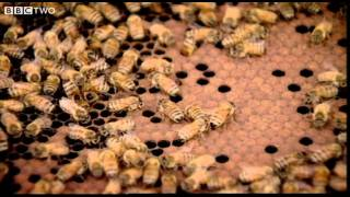 Behind The Beehive - The Code - Episode 2 - Bbc Two