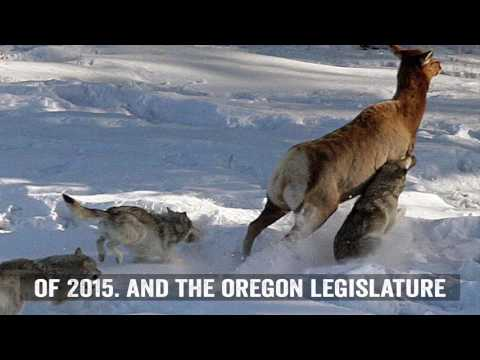 Oregon Court Accepts RMEF's Brief In Wolf Lawsuit