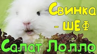 🍴 Свинка-шеф  🌱САЛАТ ЛОЛЛО РОССО🌱