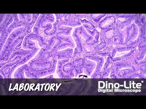 Dino-Lite Applications: Laboratory