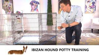 Ibizan Hound Potty Training from WorldFamous Dog Trainer Zak George   Train a Ibizan Hound Puppy