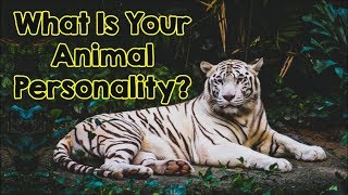The Animal You Pick Will Reveal Your True Personality
