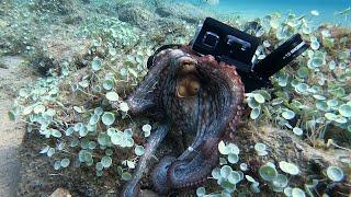 Octopus Tries to Take Camera || ViralHog