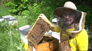 Beginner Beekeepers: 3 Essential Skills