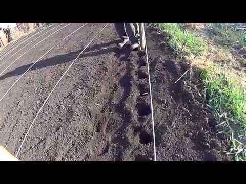 видео: Посадка картофеля необычным способом