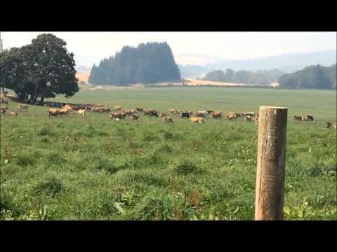 A Trip to an Organic Farm Dairy Farm