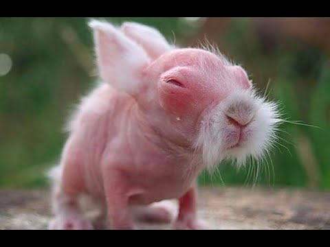 Baby Bunnies Cuteness Overload