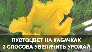 Пустоцвет на Кабачках 3 Способа Увеличить Урожай. Кабачки в Открытом Грунте.