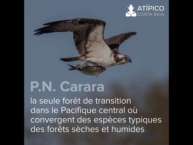 Le Costa Rica, un paradis pour les amateurs d'oiseaux !