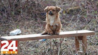 Napušteni psi i mačke čekaju svoje poginule vlasnike 💔
