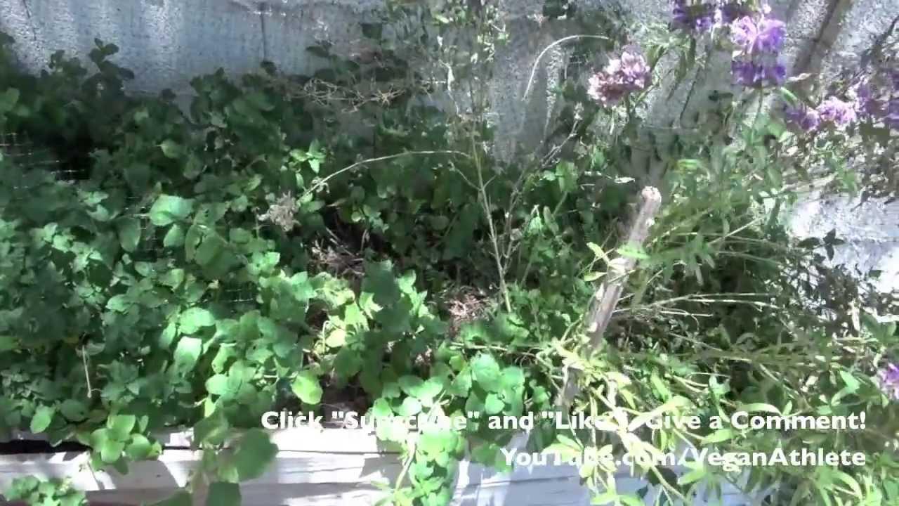 incredible backyard garden arizona youtube