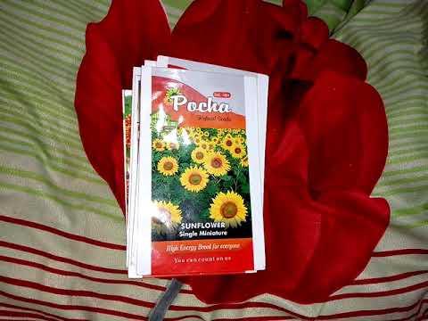 Summer season flowering plant seed