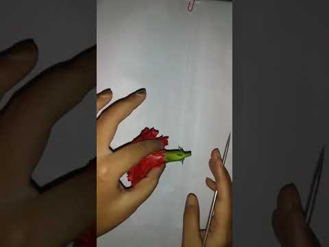 Hibiscus Rosa Sinensis Dissection Practical Youtube