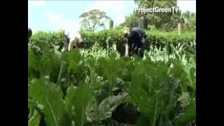 Project Green Episode 5 - AGRICULTURE