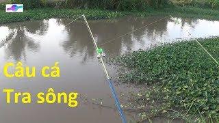 Câu vào ổ cá tra sông hai anh em  không muốn về nhà | Fishing Vietnam