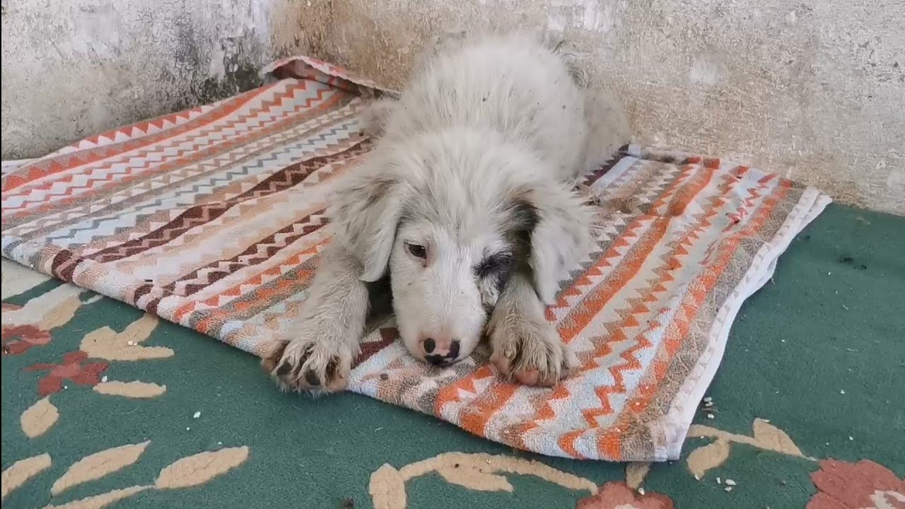 Puppy that found abandoned and injured.. Watch his life today... (part 2)