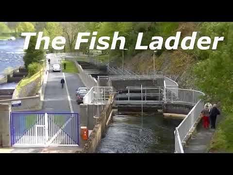 Pitlochry Dam And Fish Ladder Circular Walk