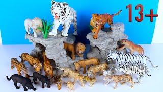 Big Cat Week 2021 - Zoo Animals - Lion Tiger Jaguar  Leopard 13+