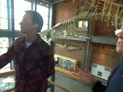 Tourism Massachusetts: New Bedford Whaling Museum