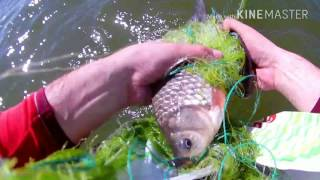 Как ловить карася сетью / How to catch a carp with a net