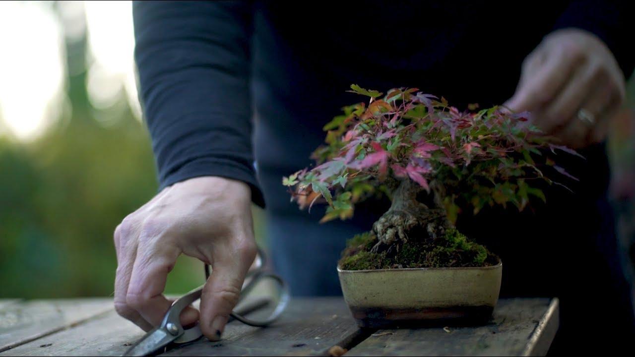 Shohin Bonsai Course Trailer Youtube
