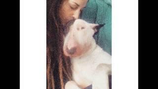 Comunidad Bull Terrier Cataluña. Stop Ley Ppp, Stop Maltrato Animal
