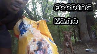 Feeding My Dog Pedigree!!!