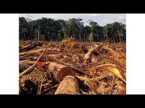 módulo-grado-superior-gestión-forestal-y-del-medio-natural
