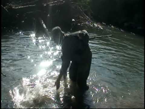 vui câu cá bờ sông
